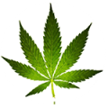 hemp-icon-cannamaps