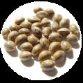 seeds-icon-cannamaps