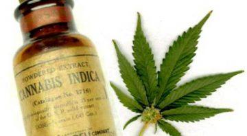 Professor Sage & Dr Greens Premier Emporium Apothecary Cannabis Collective Courier